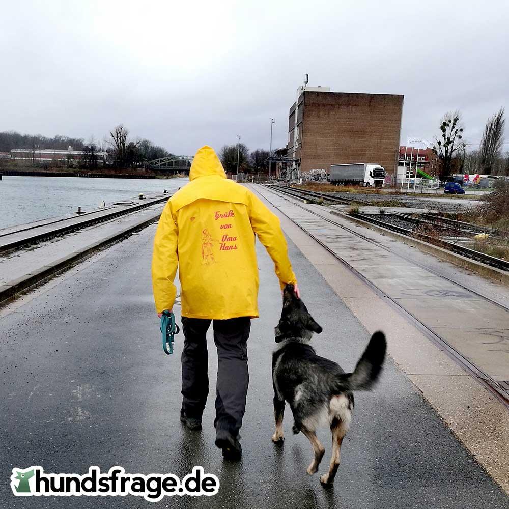 Gassi mit Hund im Regen - hundsfrage.de