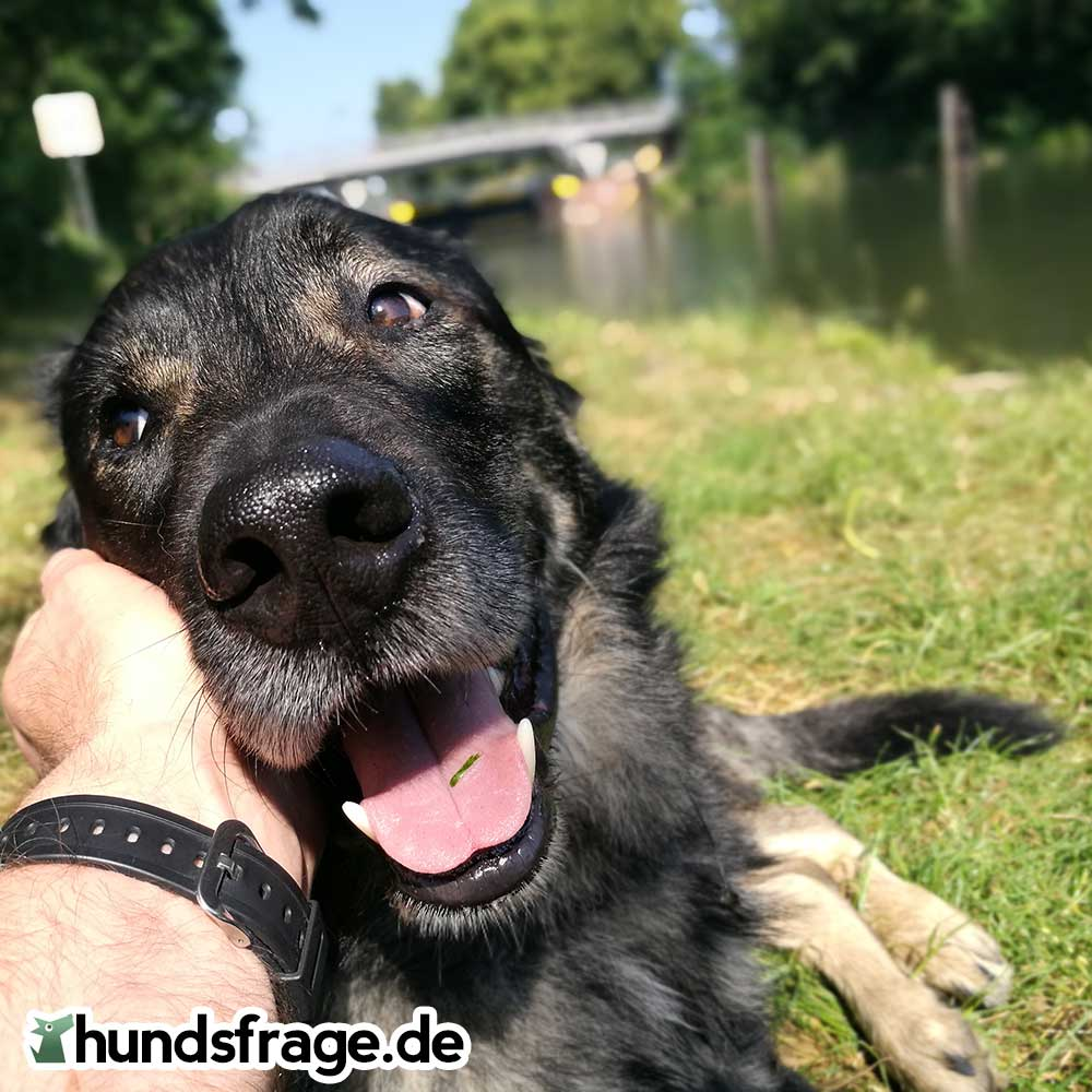 Mein Hund Freddy ist glücklich - hundsfrage.de