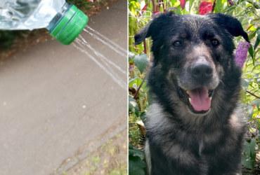 Einfach & effektiv: Selbst gebaute Hundedusche für unterwegs